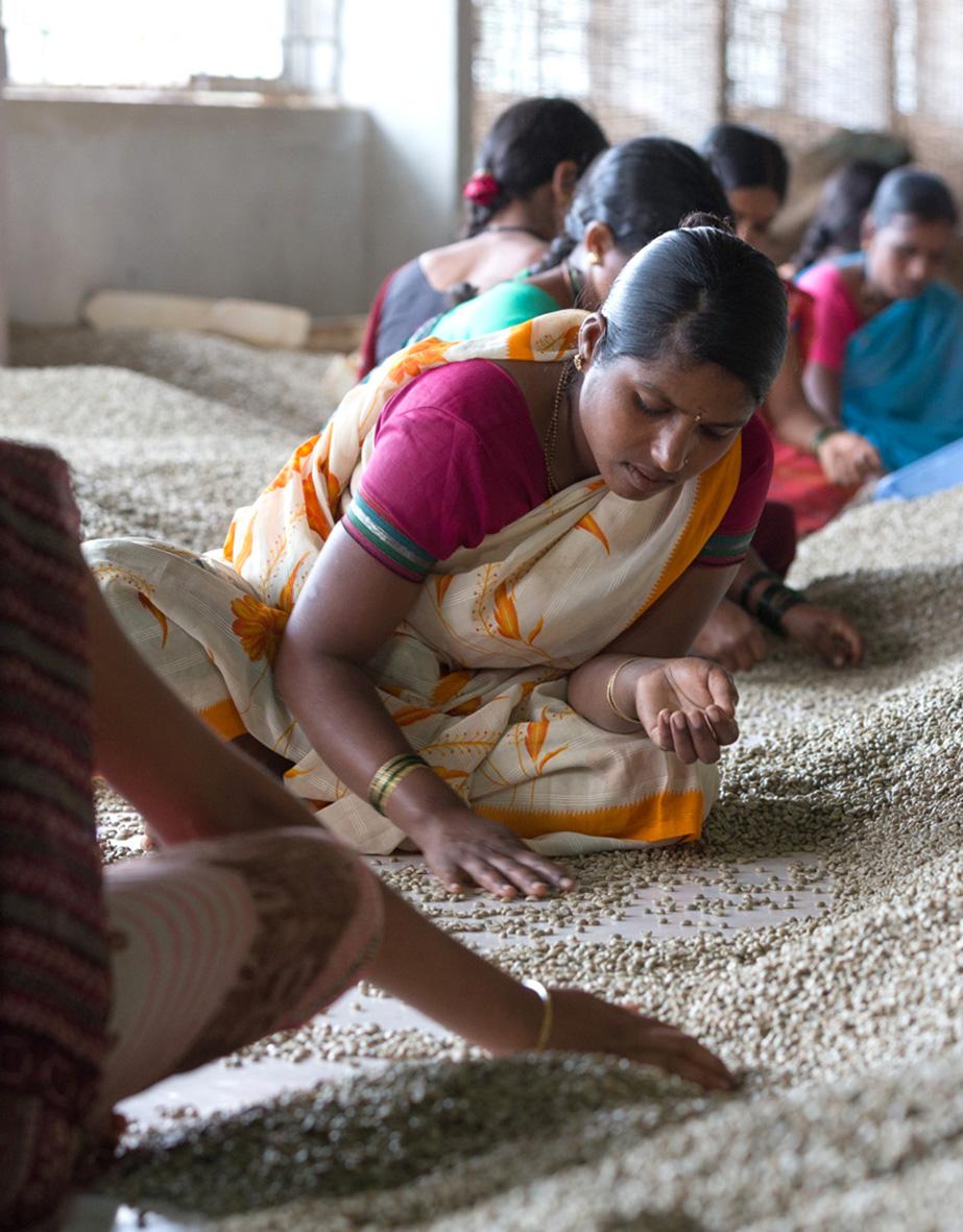 La Ruga –Die Kaffeerösterei –Herkunft, Badras Estates, Indien