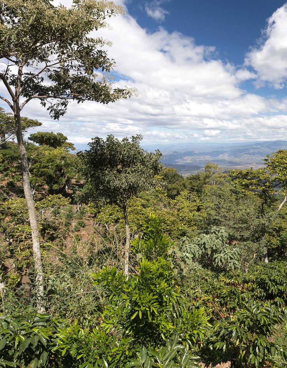La Ruga –Die Kaffeerösterei –Finca La Buena Esperanza, El Salvador