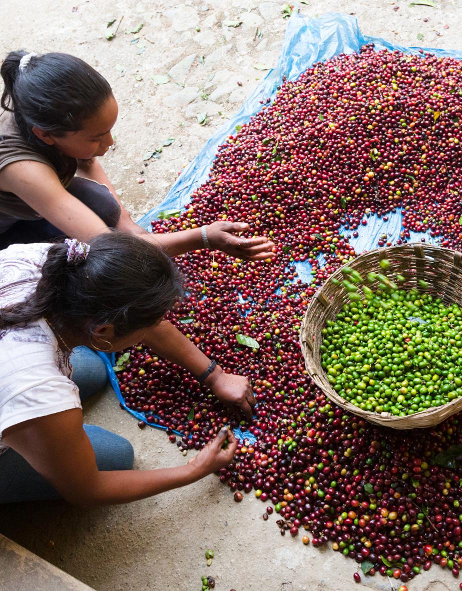 La Ruga –Die Kaffeerösterei –Finca Hamburgo Mexico