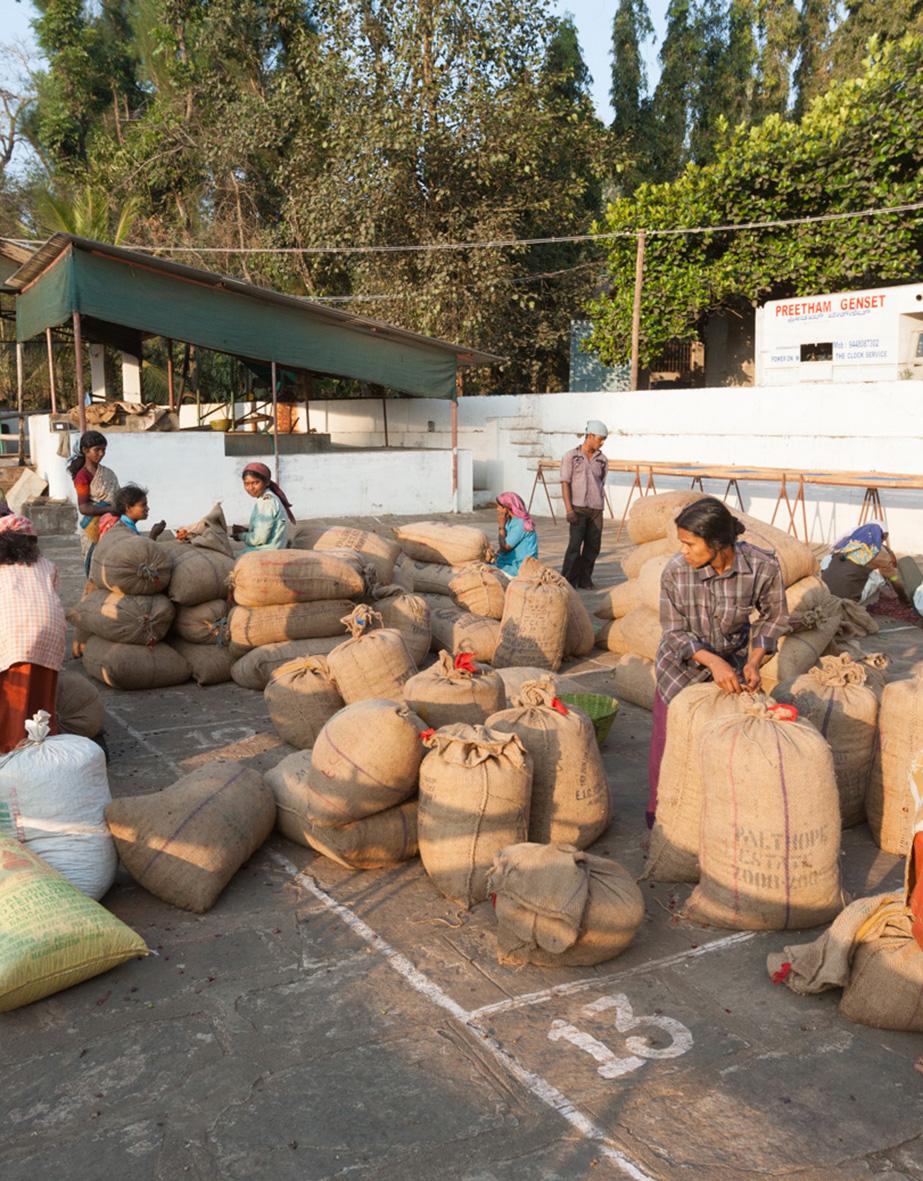 La Ruga –Die Kaffeerösterei –Herkunft, Palthope Estate, Indien