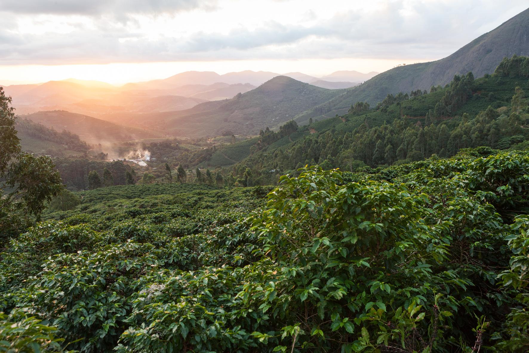 La Ruga –Die Kaffeerösterei –Slider, Partner